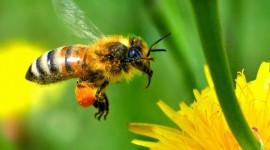 abeille-documentaire