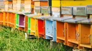ruches en apiculture