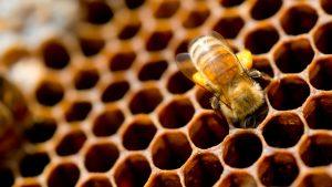 abeille-ruche
