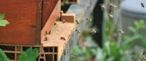 abeilles dans une ruche