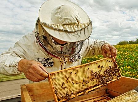 commencer l apiculture