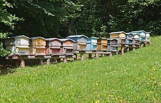 ruches-apiculteur-débutant
