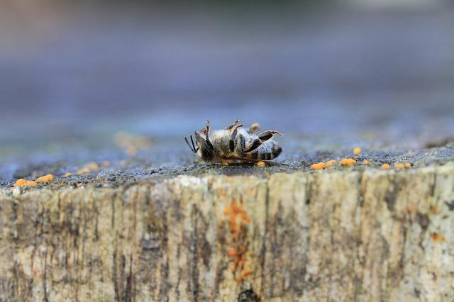 Une abeille morte