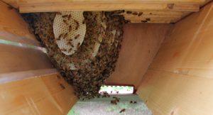 intérieur d'une ruche kenyane