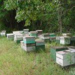 Ensemble de ruches langstroth