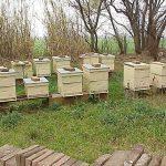 Ensemble de ruches voirnot