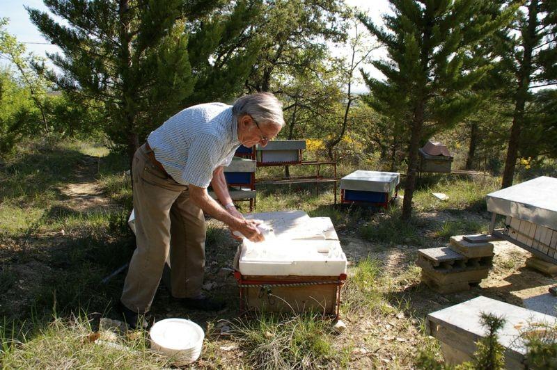 Saisons dans la ruche
