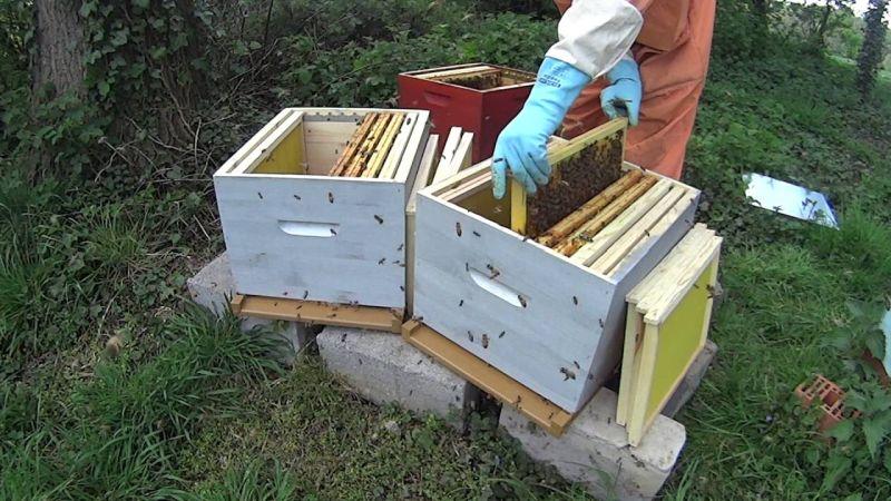 Diviser une ruche