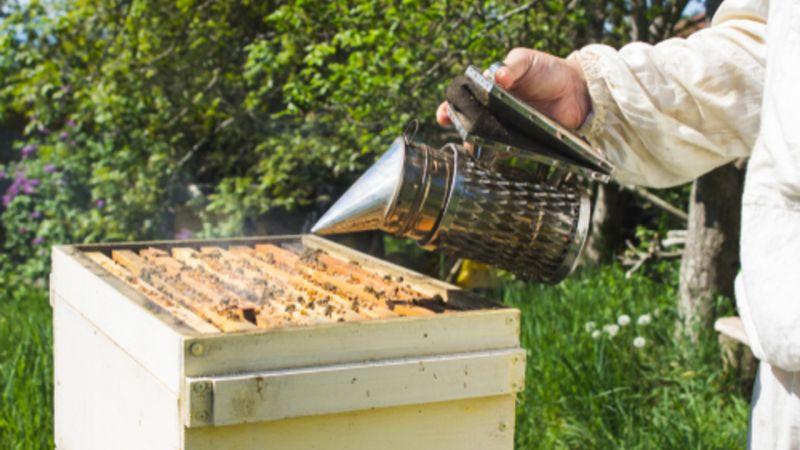 Le calendrier apicole
