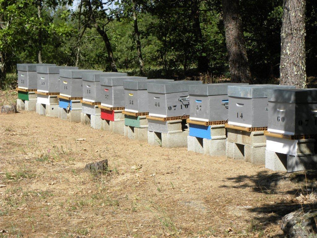 Bien organiser son rucher