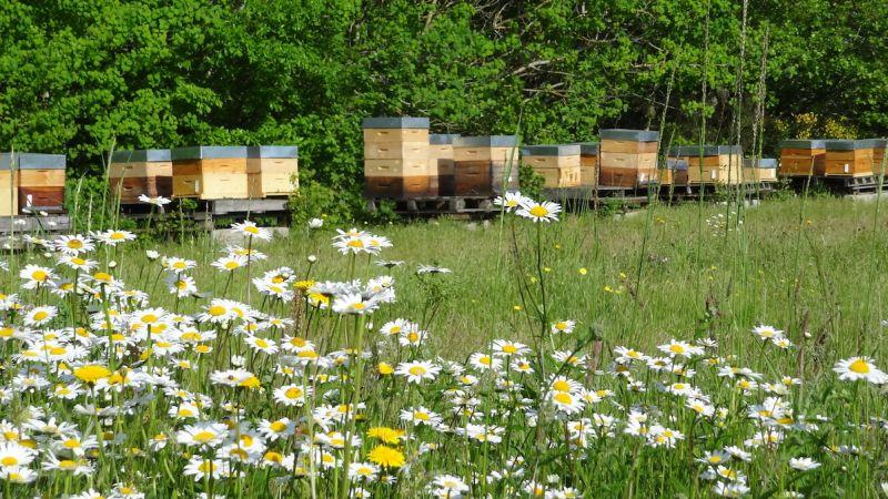 Choisir un bon emplacement pour son rucher