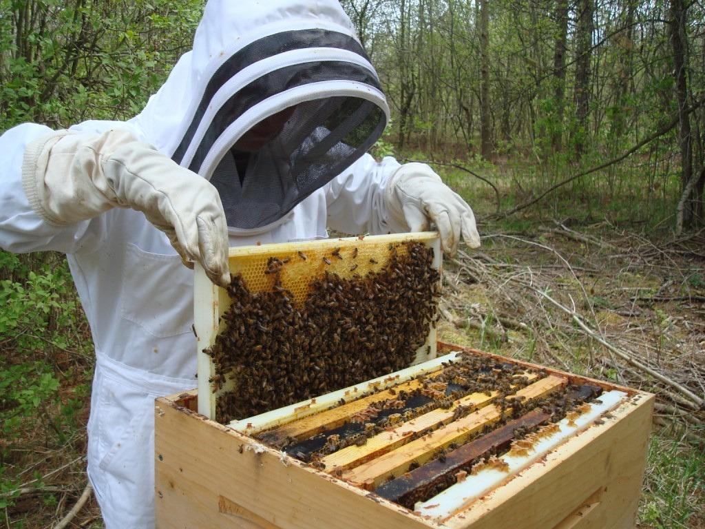 Ouvrir et inspecter une ruche